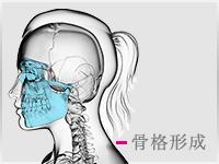 骨格形成の施術ページへ